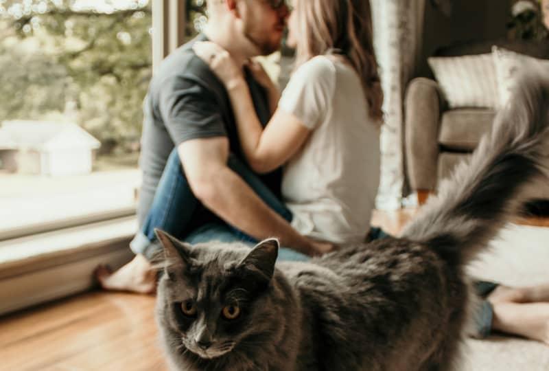 kurzhaarige graue Katze