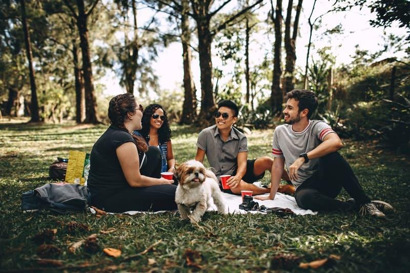 ein Picknick eines Freundes im Wald mit einem kleinen Hund