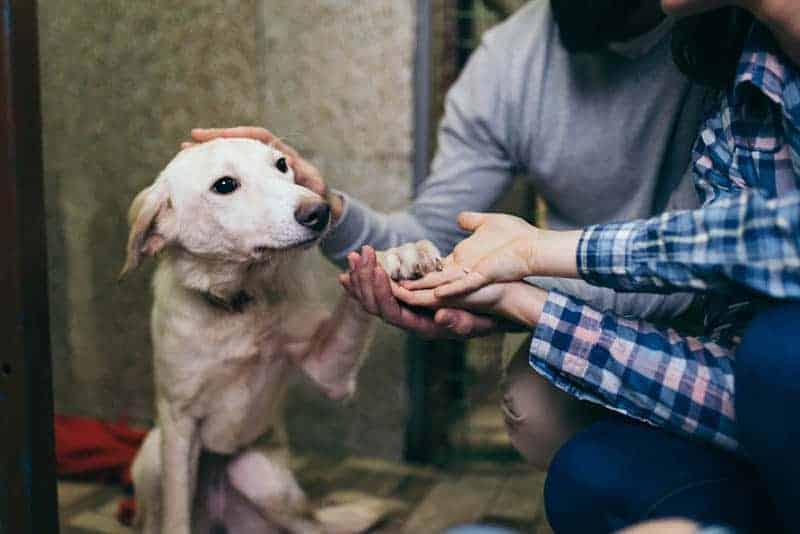Ein Mann und eine Frau streicheln einen Hund