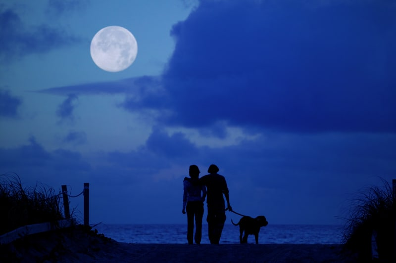 moonlight couple walk
