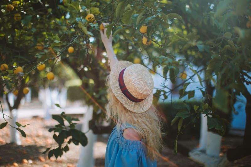 Die Frau mit dem Hut pflückt Früchte
