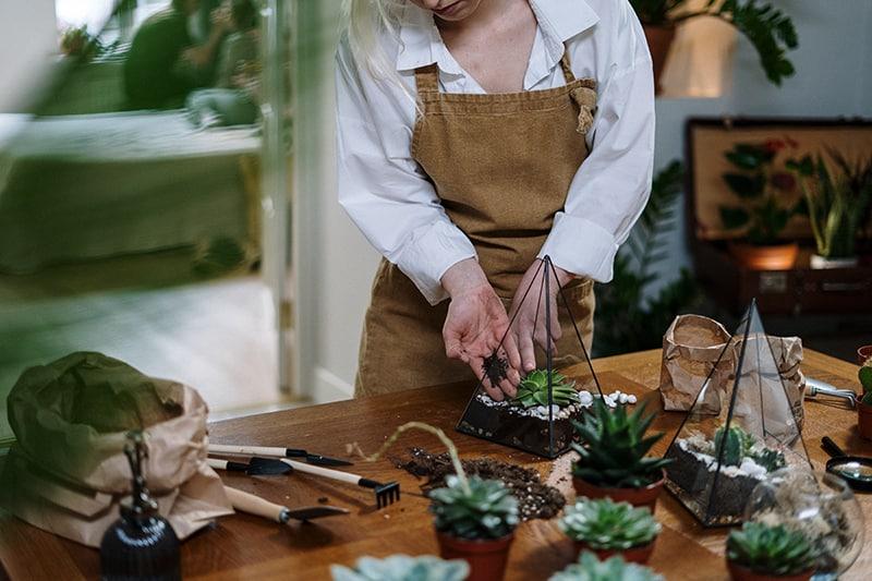 Frau pflanzt Pflanzen am Tisch im Haus