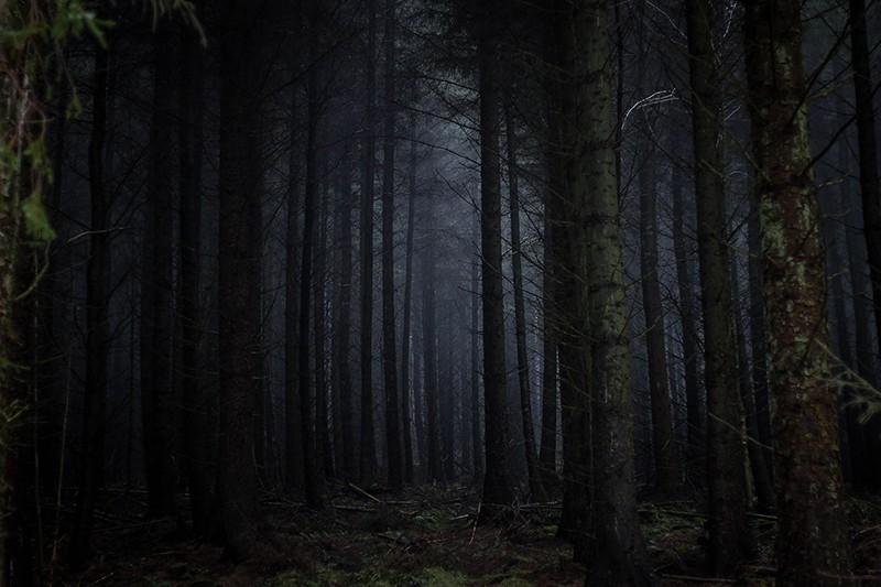 dunkler Wald in Großbritannien in Yorkshire