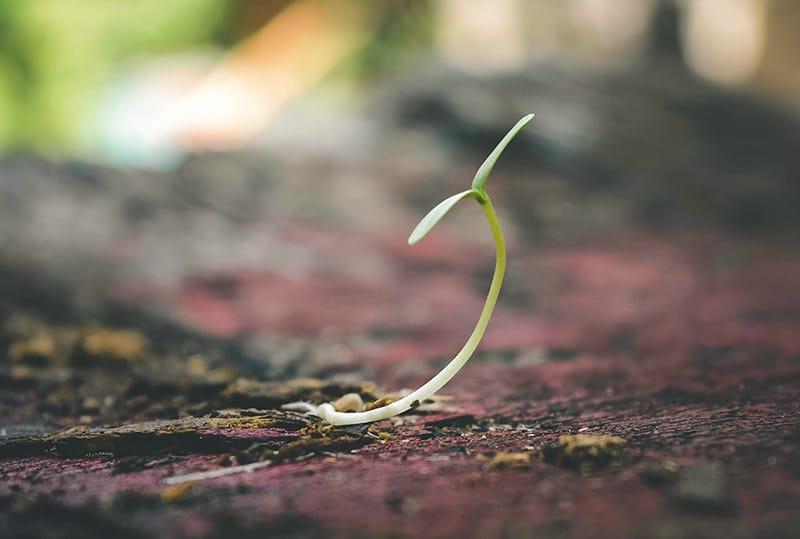 Spross der Pflanze auf dem Boden