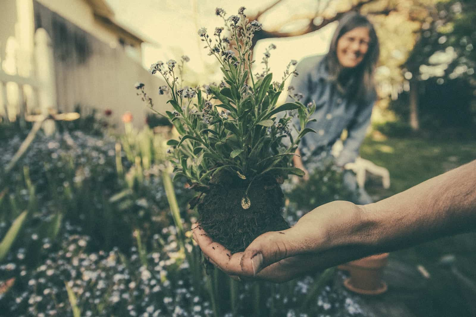 Ein Mann zeigt einer Frau eine Lavendelpflanze, während er zusammen im Garten arbeitet