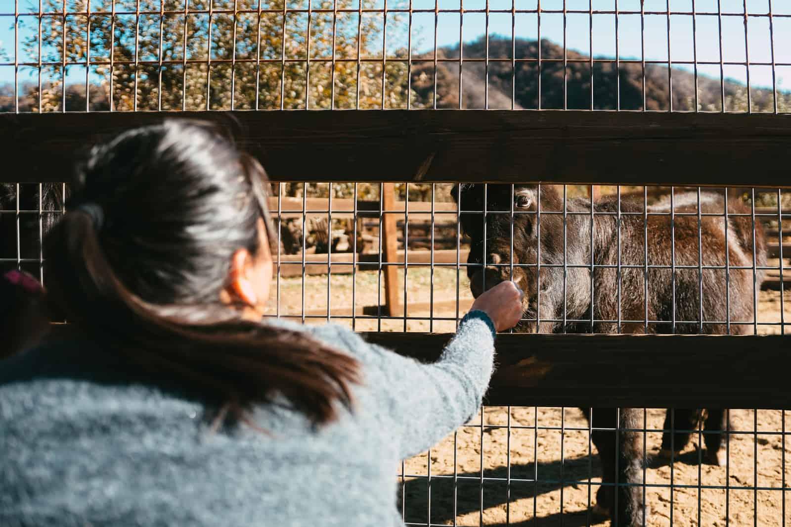 eine Frau streichelt ein Pony im Zoo