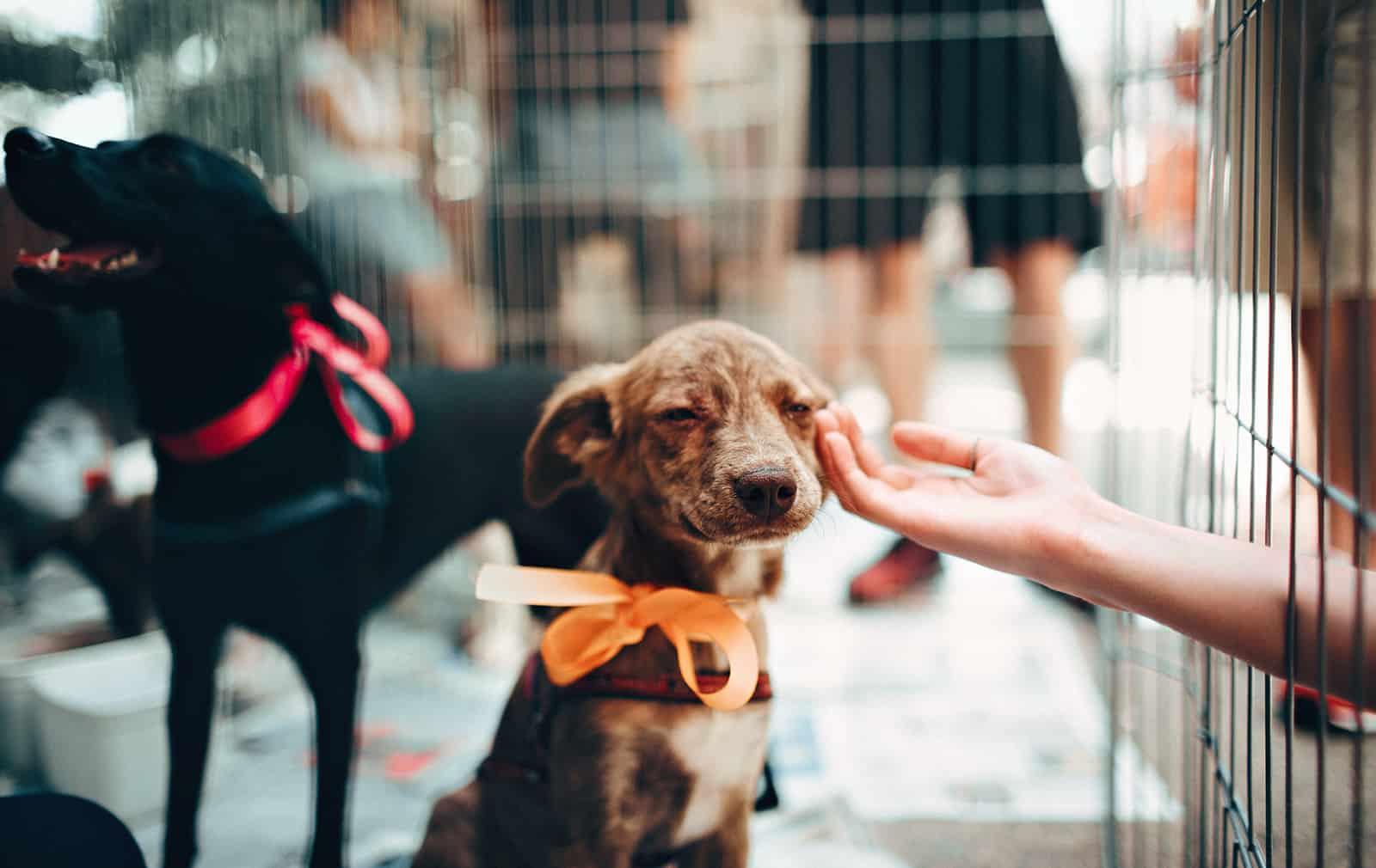 eine Person, die einen braunen Welpen in einem Hundehaus berührt
