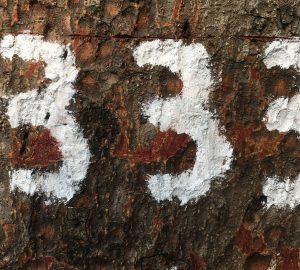 Nummer 333 auf dem Baum